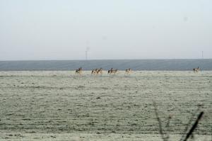 Őzsuta,gida vadászati lehetőség