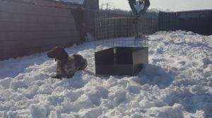 Kutya szállító box