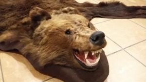 Medve barnamedve trófea