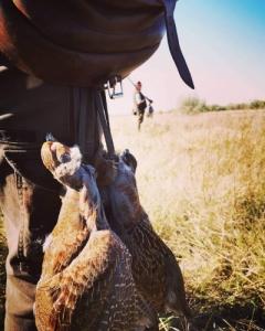 Fogolyvadászat Balástyán