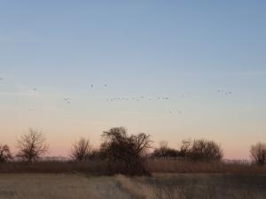 Keresek: vadászati lehetőség Vas megye
