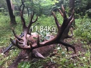 Szarvasbikavadászat 10kg feletti agancssúlyal!