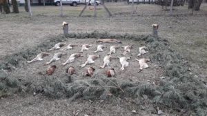 Apróvad vadászat