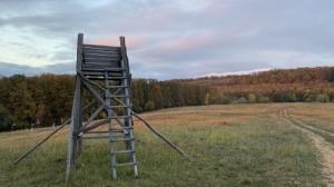 Bakonyban 124 hektáros kiváló vadászbirtok eladó.