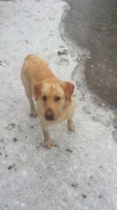 Labrador kan. mitsubishi pajero ac�lfelni+steyr szerel�k