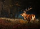 Gím bika vadászati lehetőséget keresünk
