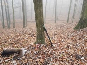 Vas megye vadászati lehetőseg