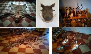 Európai és afrikai vadak trófeái