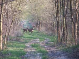 vadászterület