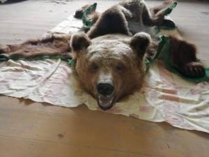 Medvebőr preparátum