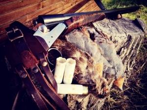 Fogoly és fácán vadászat Balástyán